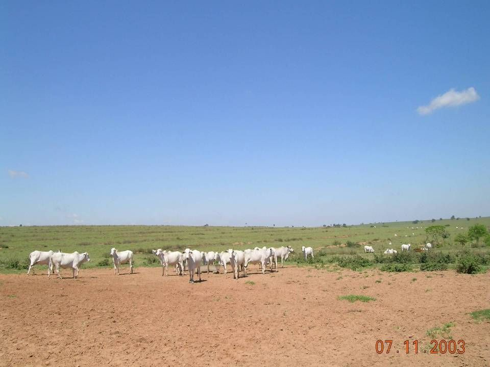 Variation in environment and animal: Fazenda Bartira, Rancharia, SP (November 7, 2003)