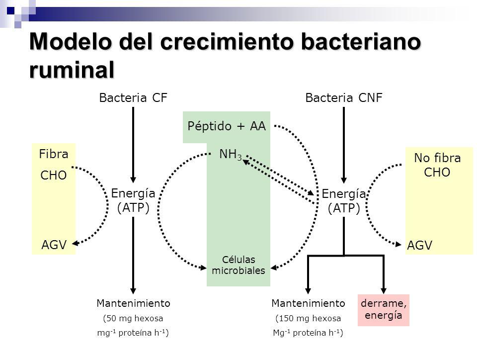 Modelo del crecimiento bacteriano ruminal