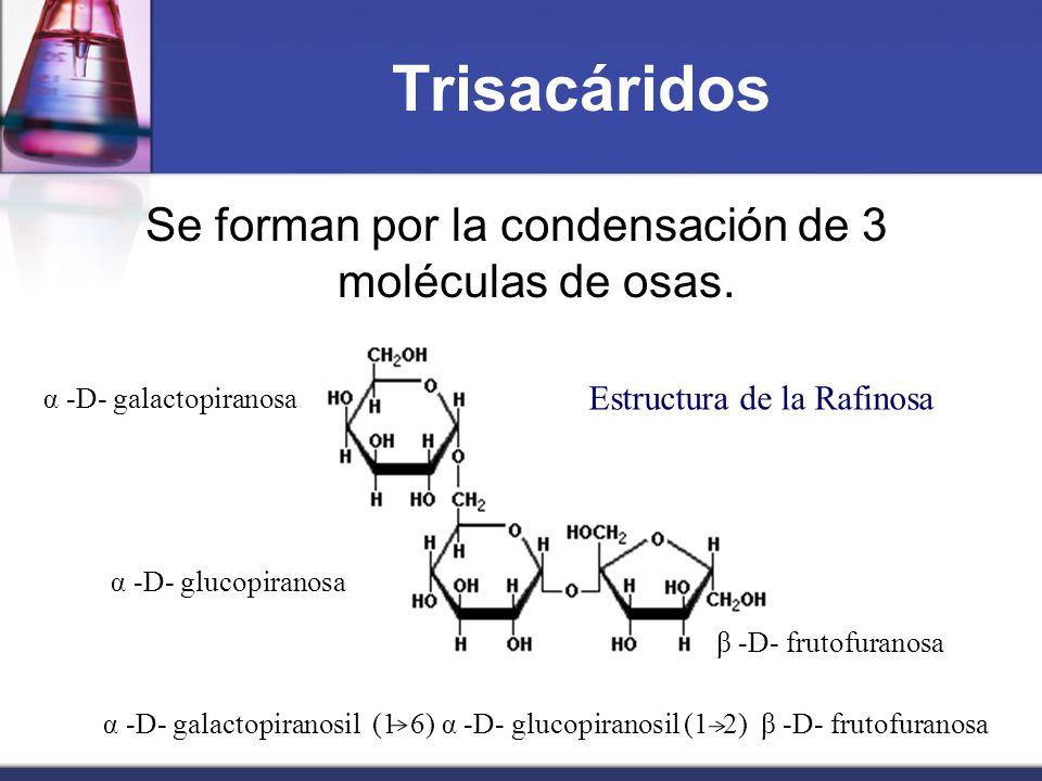 Trisacáridos Se forman por la condensación de 3 moléculas de osas.