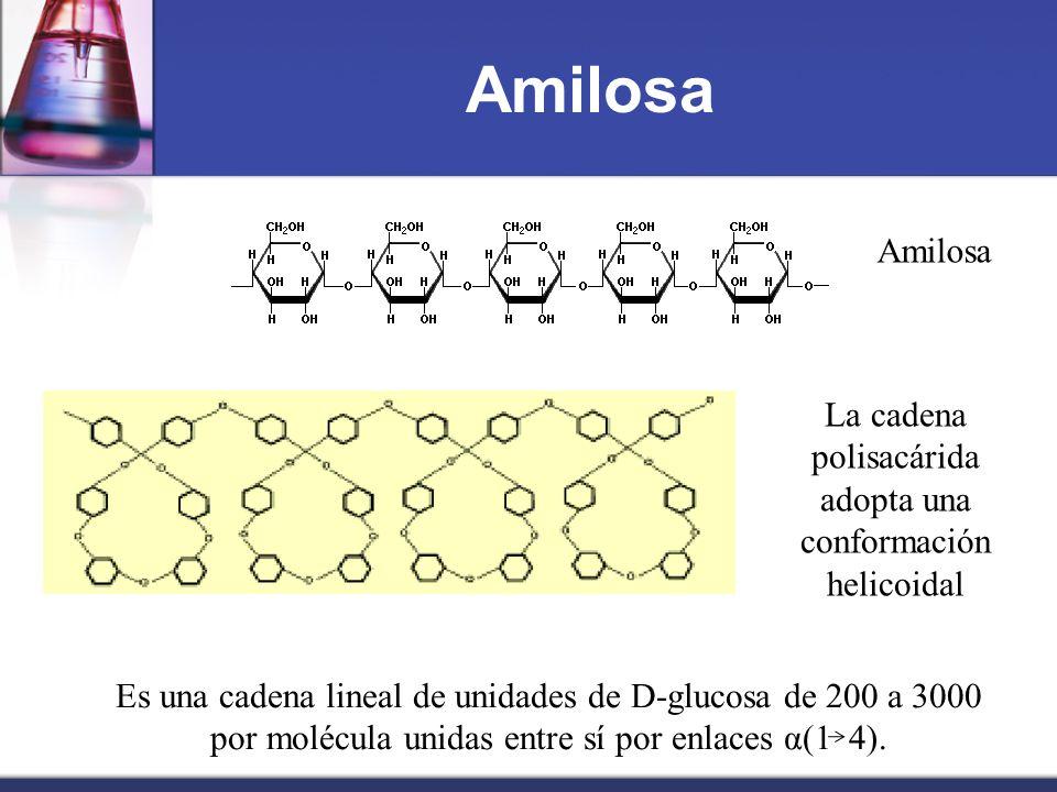 La cadena polisacárida adopta una conformación helicoidal