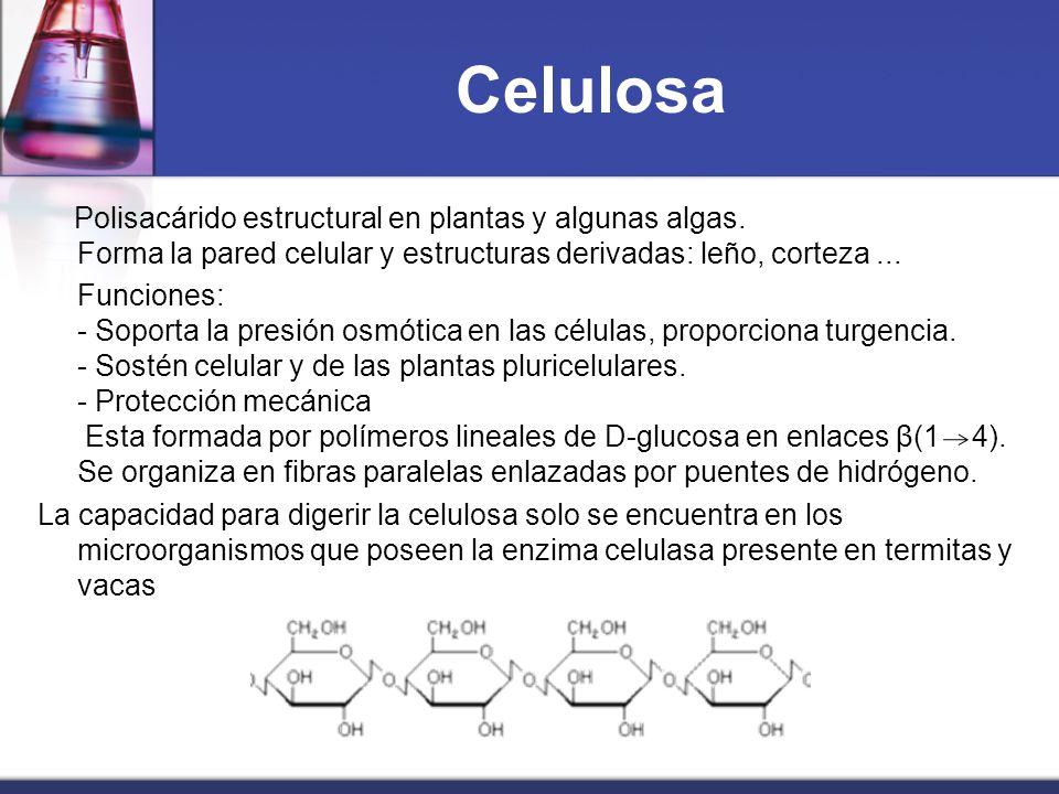 Celulosa Polisacárido estructural en plantas y algunas algas. Forma la pared celular y estructuras derivadas: leño, corteza ...