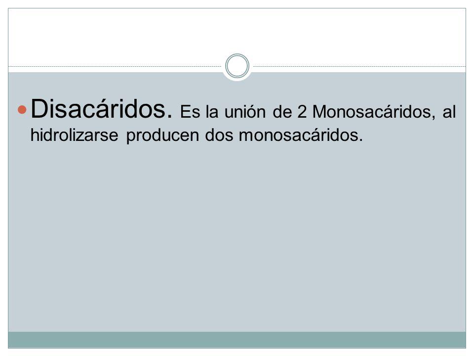 Disacáridos. Es la unión de 2 Monosacáridos, al hidrolizarse producen dos monosacáridos.
