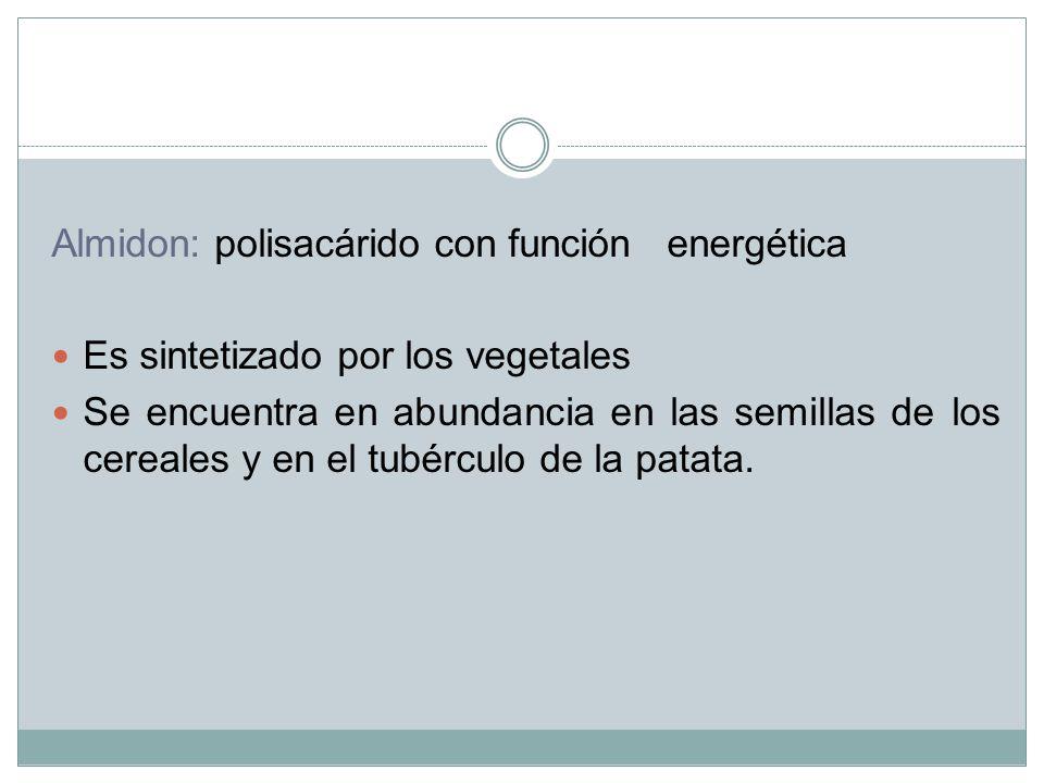 Almidon: polisacárido con función energética