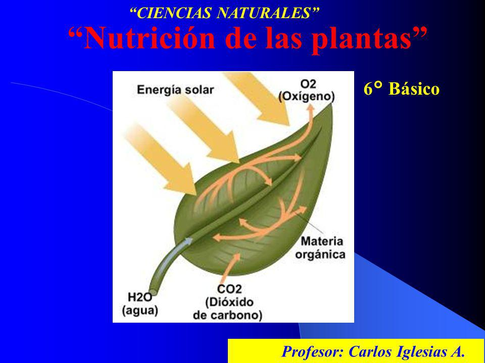 Nutrición de las plantas 6° Básico