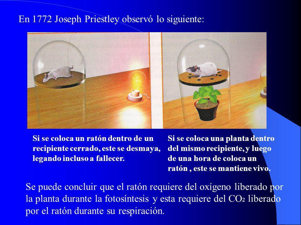 En 1772 Joseph Priestley observó lo siguiente: