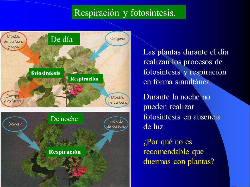 Respiración y fotosíntesis.