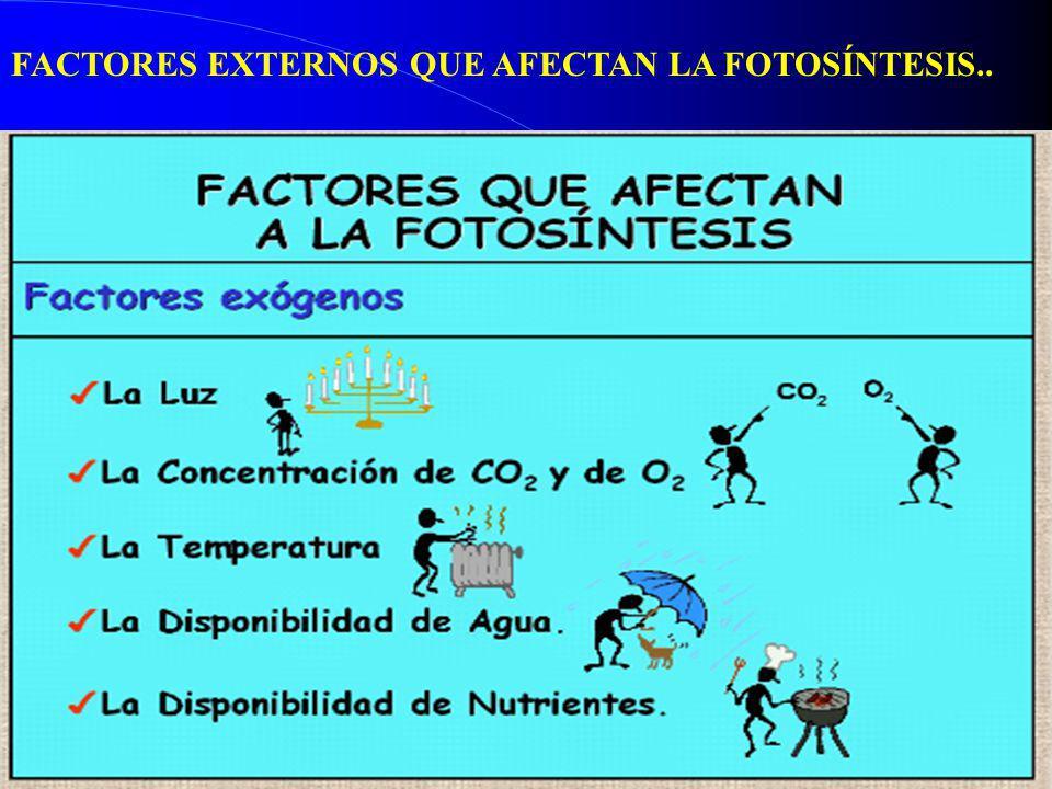 FACTORES EXTERNOS QUE AFECTAN LA FOTOSÍNTESIS..