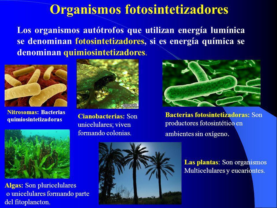 Organismos fotosintetizadores