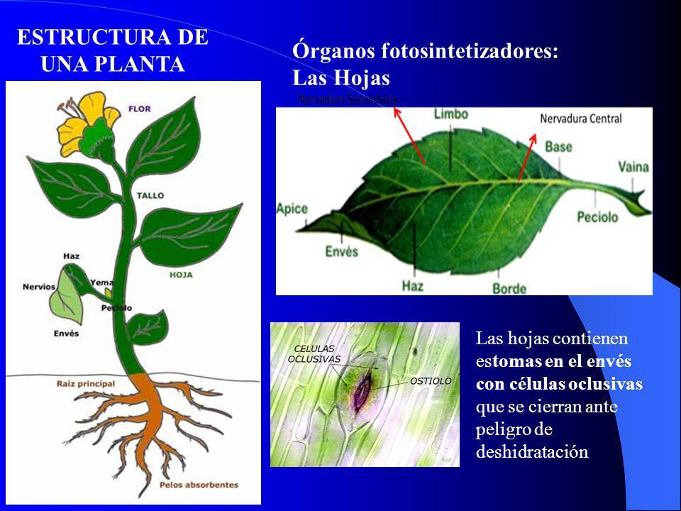 ESTRUCTURA DE UNA PLANTA