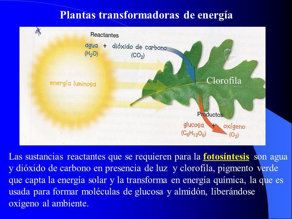 Plantas transformadoras de energía