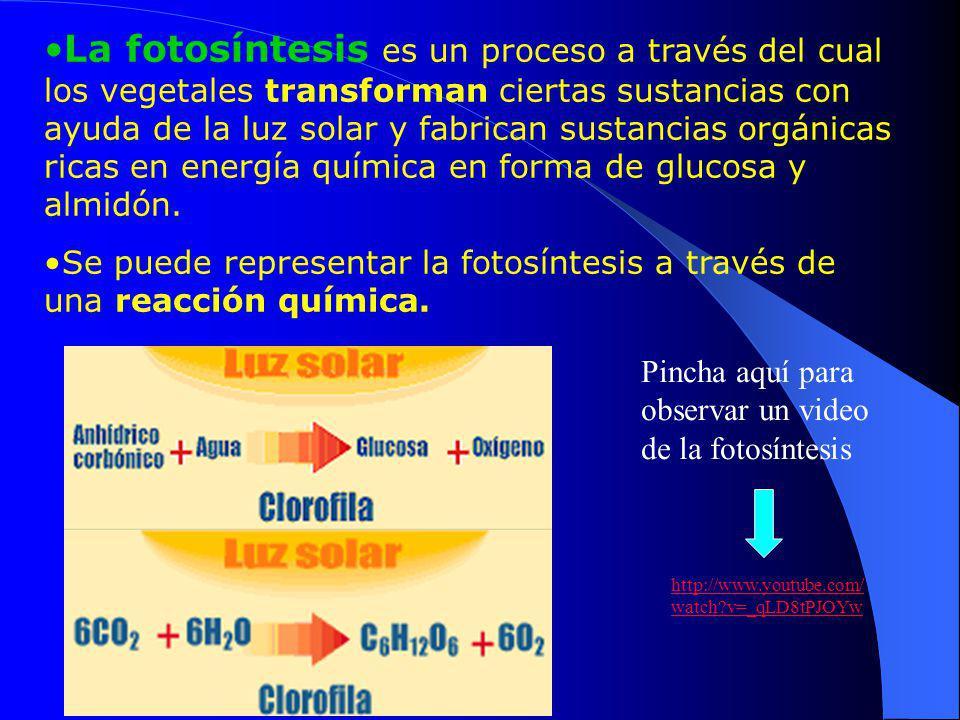 La fotosíntesis es un proceso a través del cual los vegetales transforman ciertas sustancias con ayuda de la luz solar y fabrican sustancias orgánicas ricas en energía química en forma de glucosa y almidón.