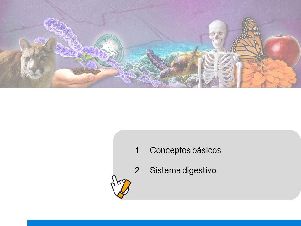 Conceptos básicos Sistema digestivo