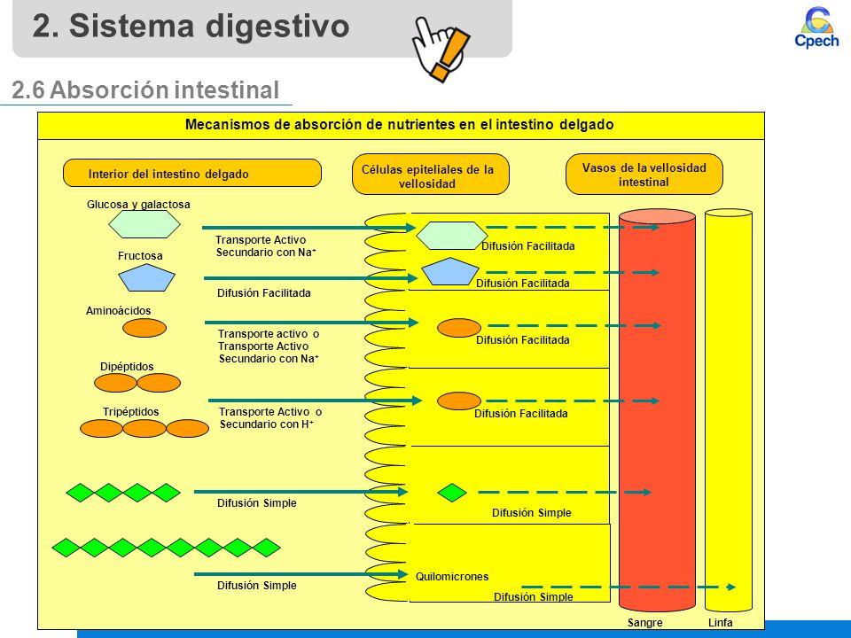 2. Sistema digestivo 2.6 Absorción intestinal