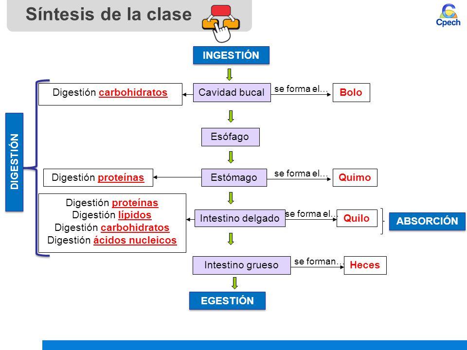 Síntesis de la clase INGESTIÓN Digestión carbohidratos Cavidad bucal