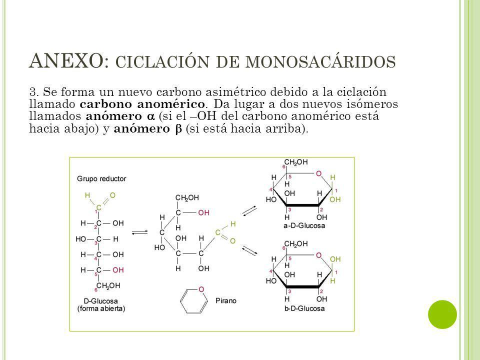 ANEXO: ciclación de monosacáridos