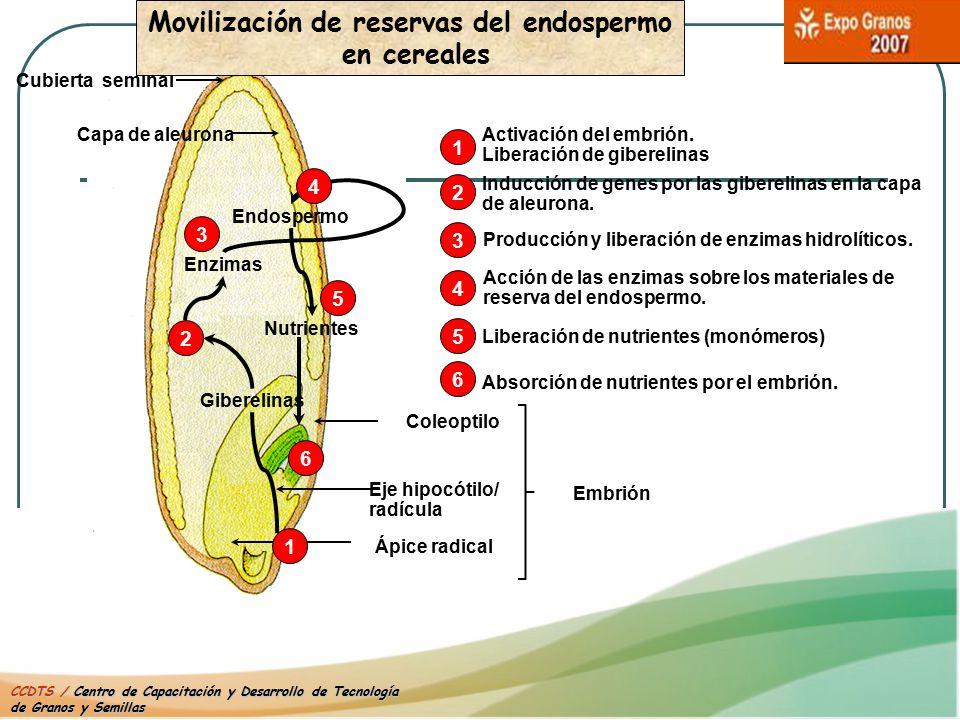 Movilización de reservas del endospermo