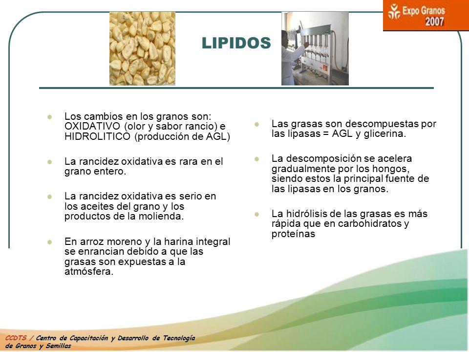 LIPIDOS Los cambios en los granos son: OXIDATIVO (olor y sabor rancio) e HIDROLITICO (producción de AGL)