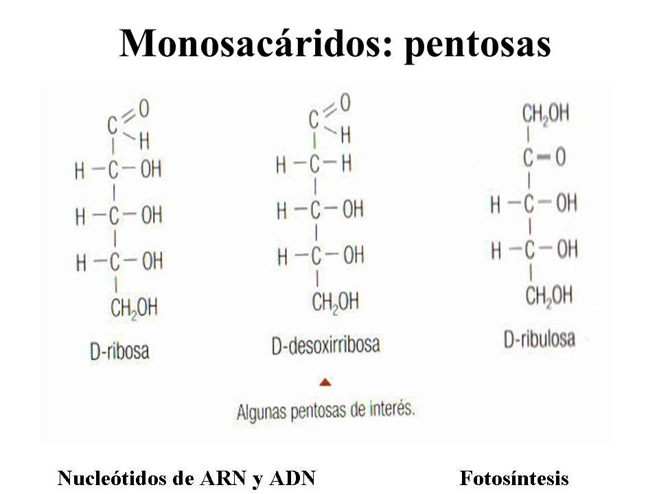 Monosacáridos: pentosas