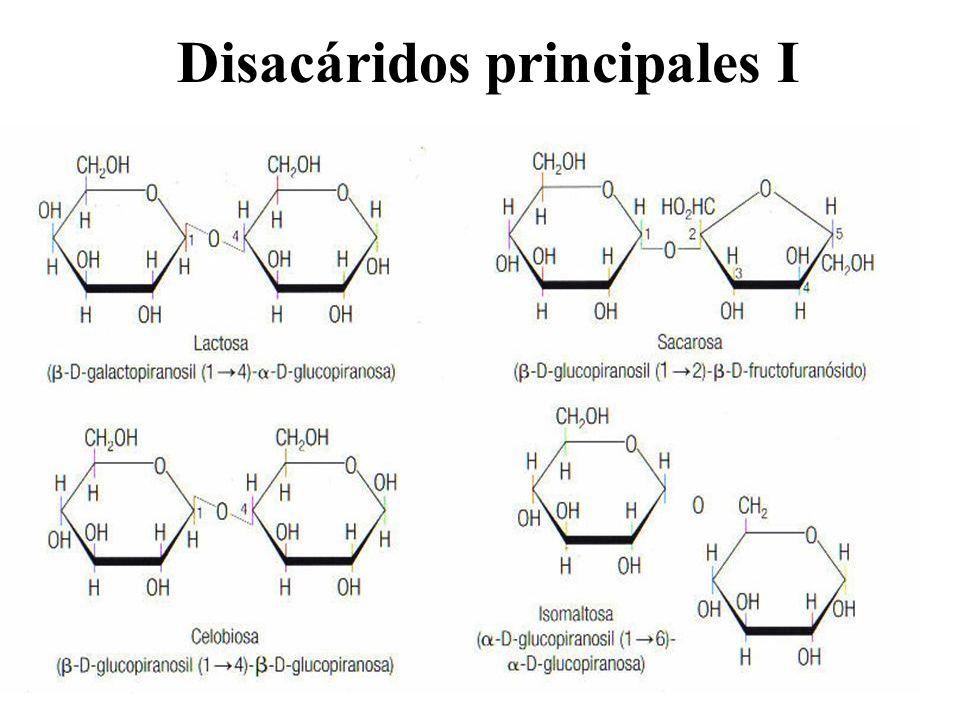 Disacáridos principales I