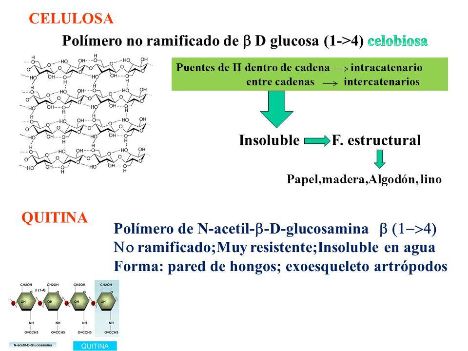 Polímero no ramificado de b D glucosa (1->4) celobiosa