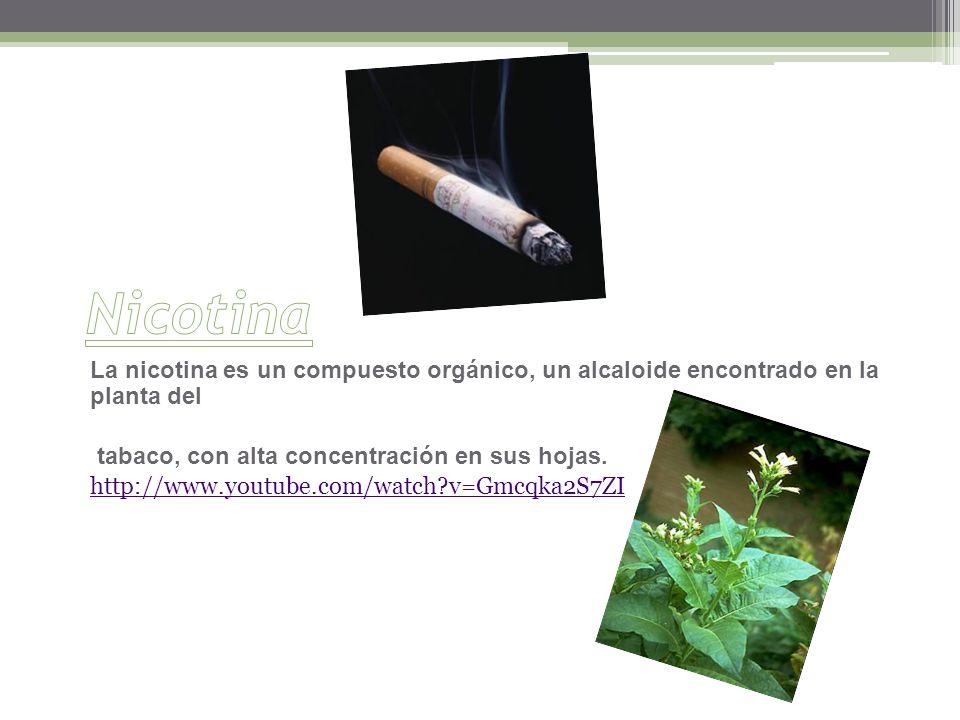 Nicotina La nicotina es un compuesto orgánico, un alcaloide encontrado en la planta del. tabaco, con alta concentración en sus hojas.