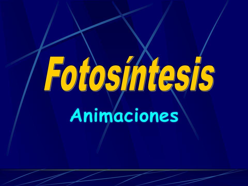 Fotosíntesis Animaciones