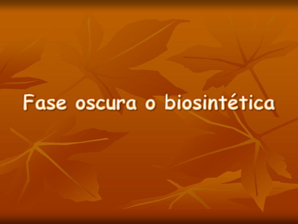 Fase oscura o biosintética