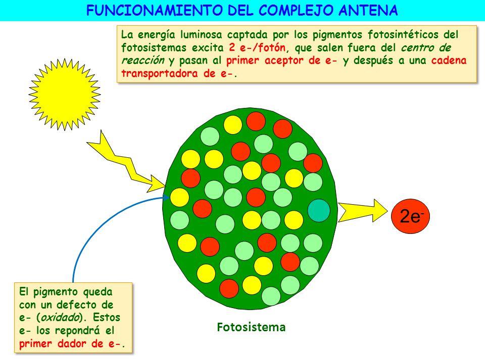 FUNCIONAMIENTO DEL COMPLEJO ANTENA