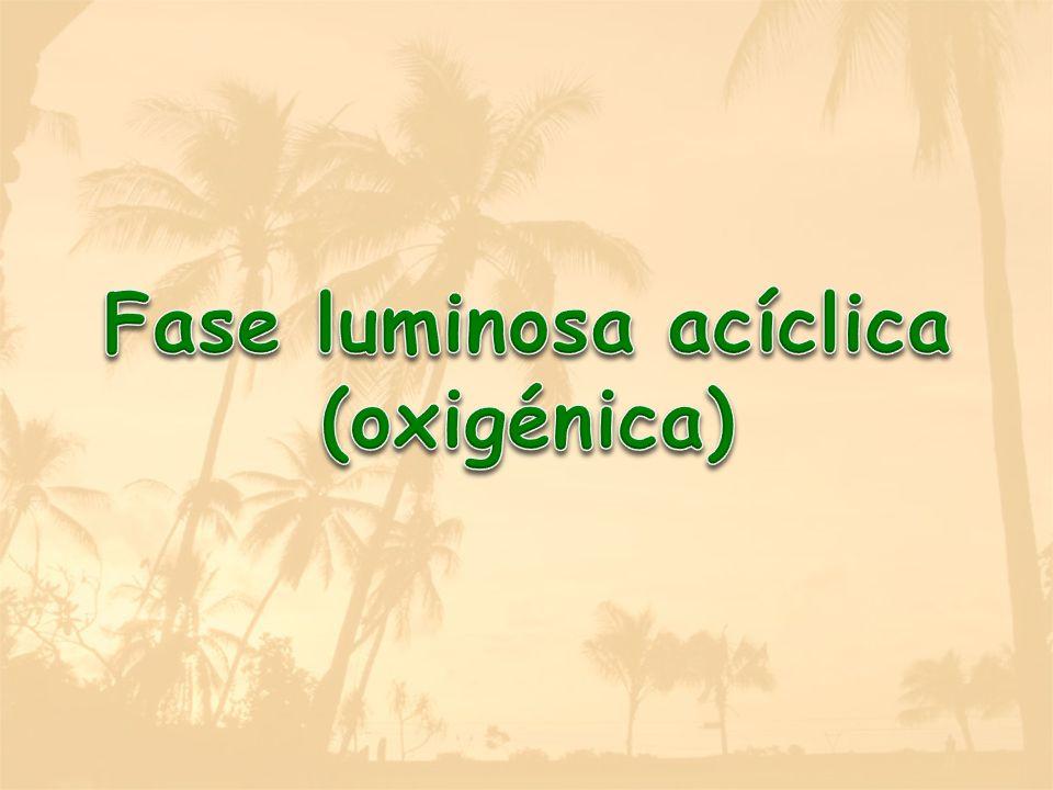 Fase luminosa acíclica (oxigénica)