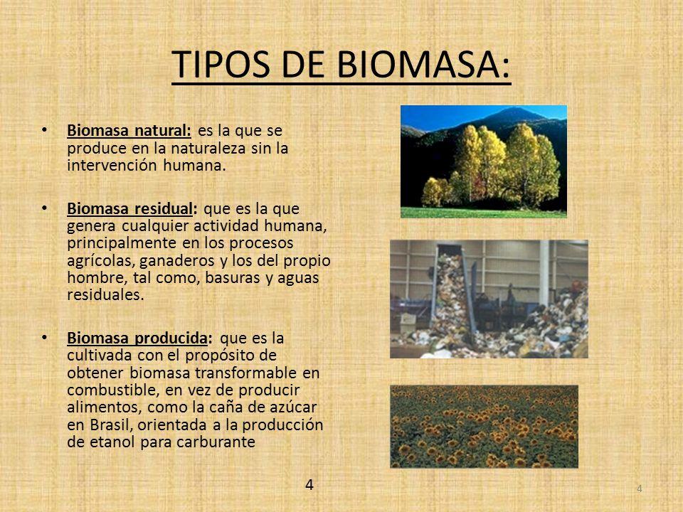 TIPOS DE BIOMASA: Biomasa natural: es la que se produce en la naturaleza sin la intervención humana.