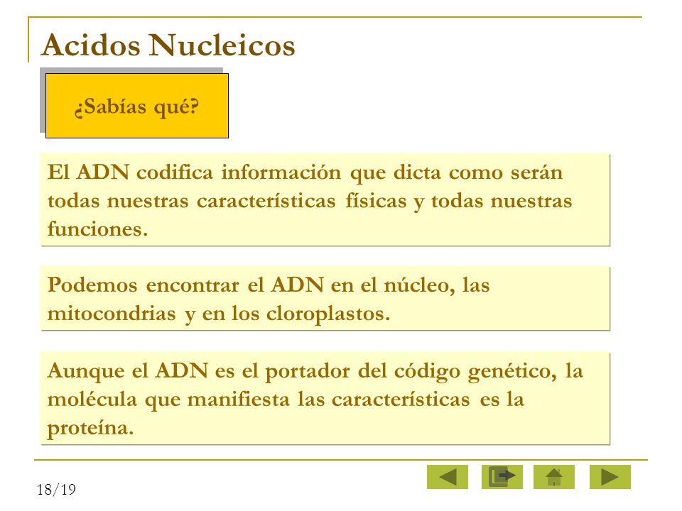 Acidos Nucleicos ¿Sabías qué