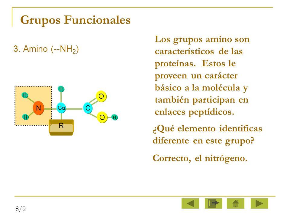 Grupos Funcionales Los grupos amino son característicos de las