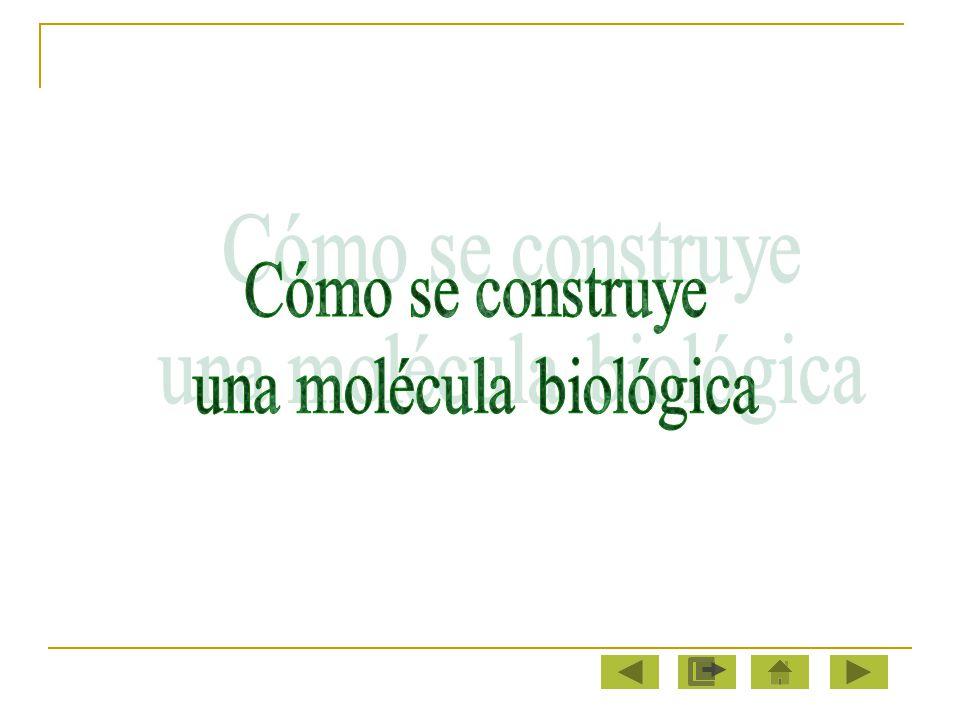 una molécula biológica