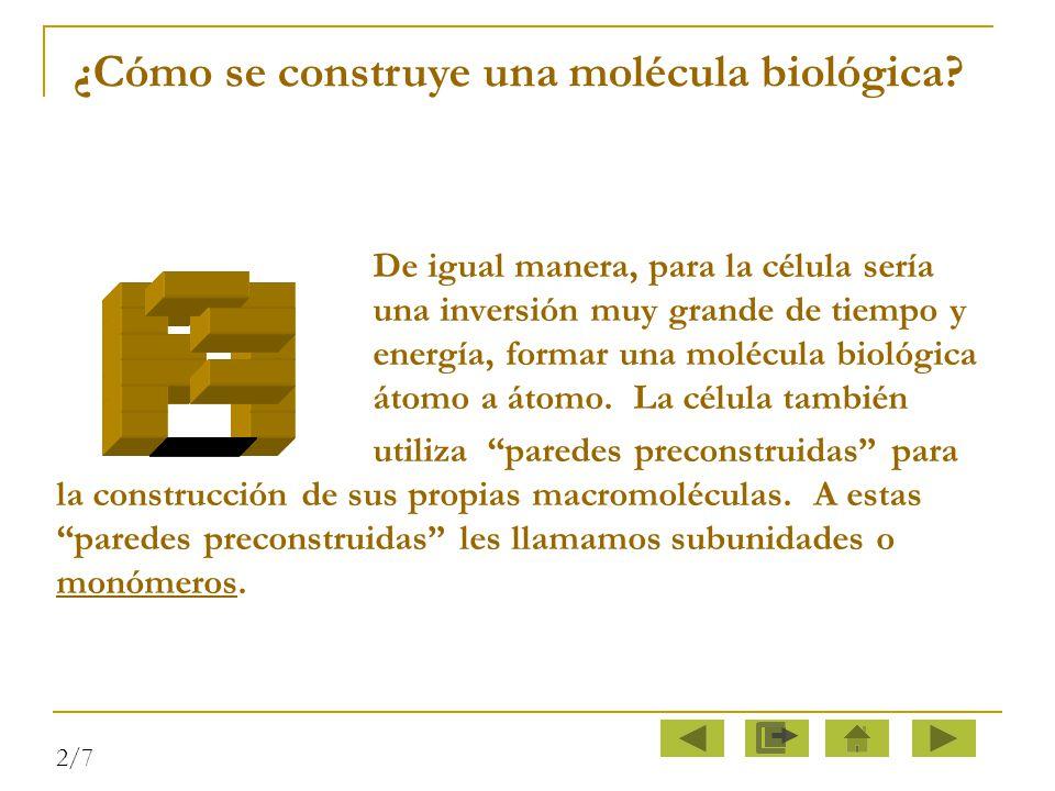 ¿Cómo se construye una molécula biológica