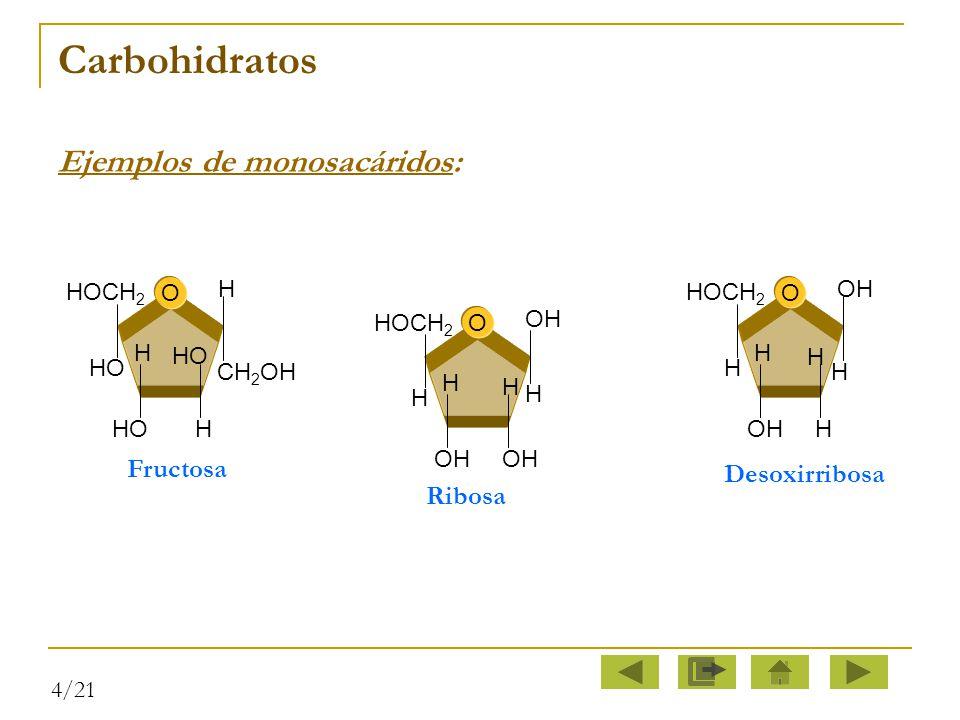 Carbohidratos Ejemplos de monosacáridos: Fructosa Desoxirribosa Ribosa