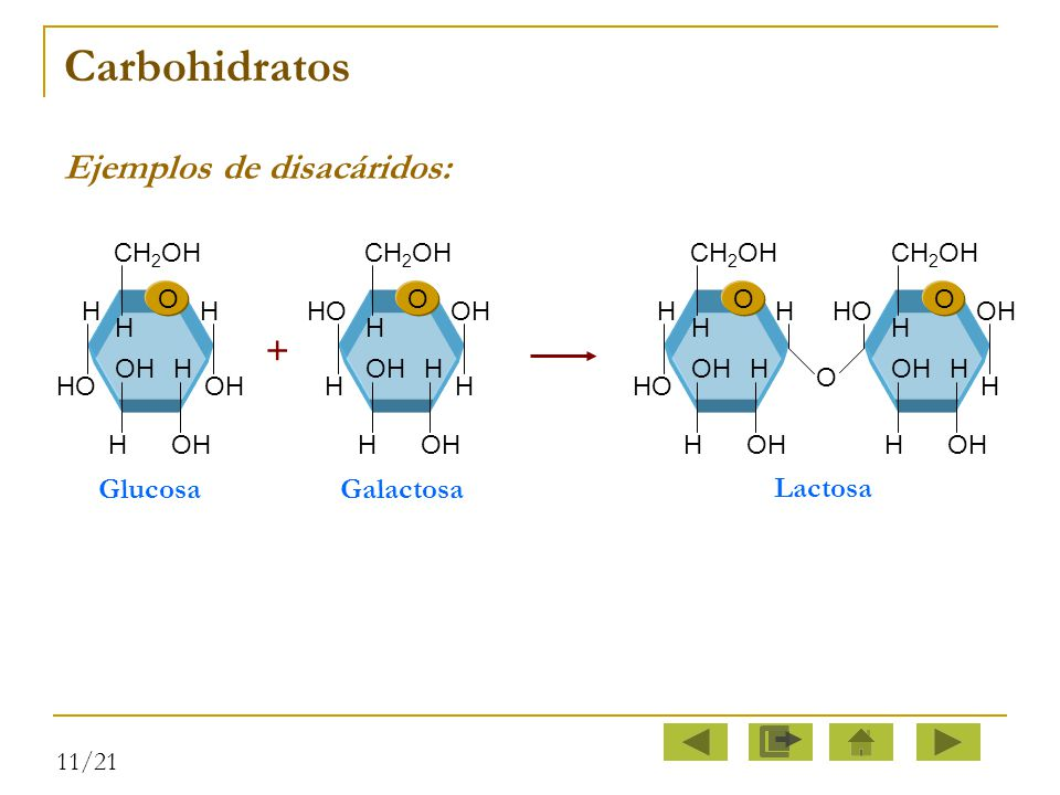 Carbohidratos Ejemplos de disacáridos: + Glucosa Galactosa Lactosa O H