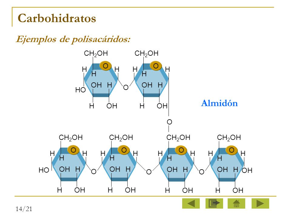 Carbohidratos Ejemplos de polisacáridos: Almidón CH2OH O H HO OH H OH