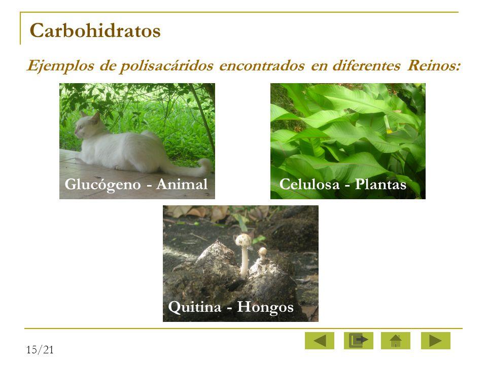 Carbohidratos Ejemplos de polisacáridos encontrados en diferentes Reinos: Glucógeno - Animal. Celulosa - Plantas.