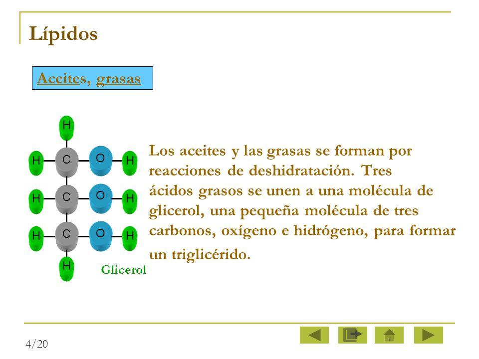 Lípidos Aceites, grasas un triglicérido.