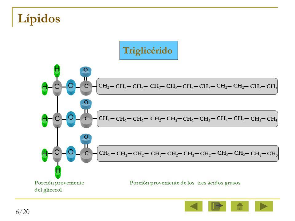 Lípidos Triglicérido C O H 6/20 C O CH2 CH3
