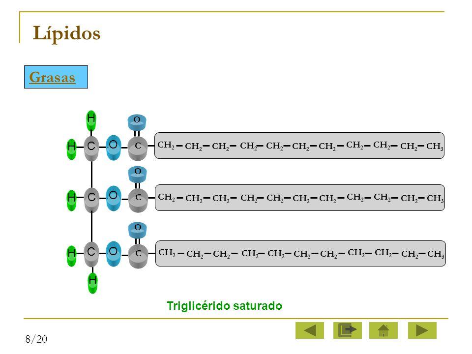 Lípidos Grasas C O H Triglicérido saturado 8/20 O C CH2 CH3 CH2 CH3 O