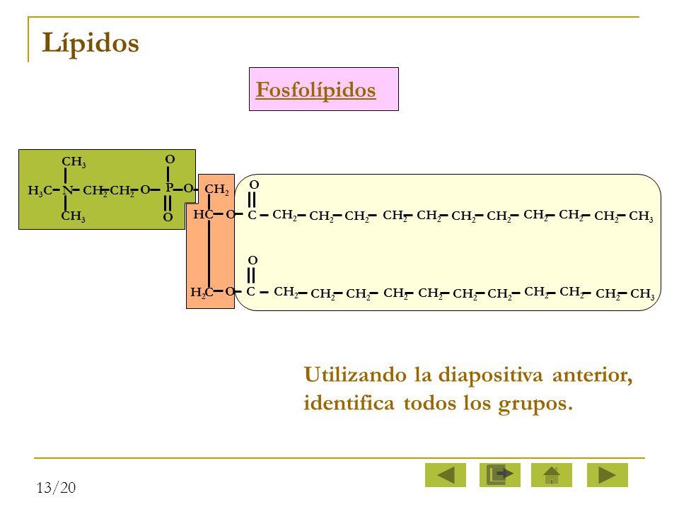 Lípidos Fosfolípidos. O. P. CH2. N. CH3. H3C. O. H2. HC. CH2. C. C. CH2. CH3. O.