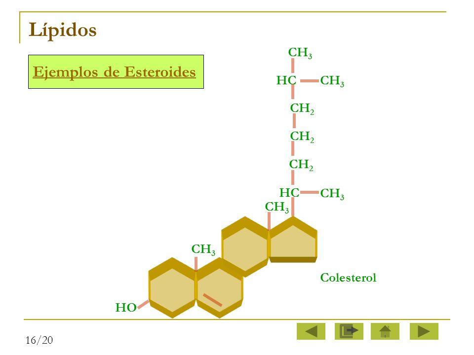 Lípidos HC CH3 CH2 Ejemplos de Esteroides Colesterol HO 16/20