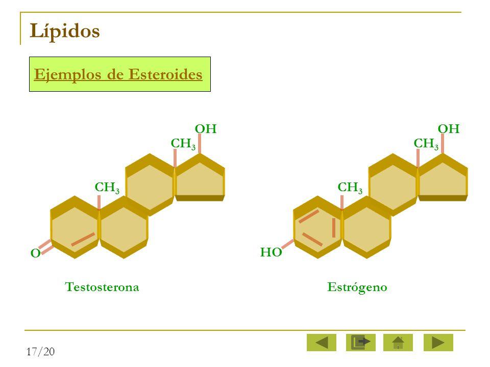 Lípidos Ejemplos de Esteroides OH OH CH3 CH3 CH3 CH3 O HO Testosterona