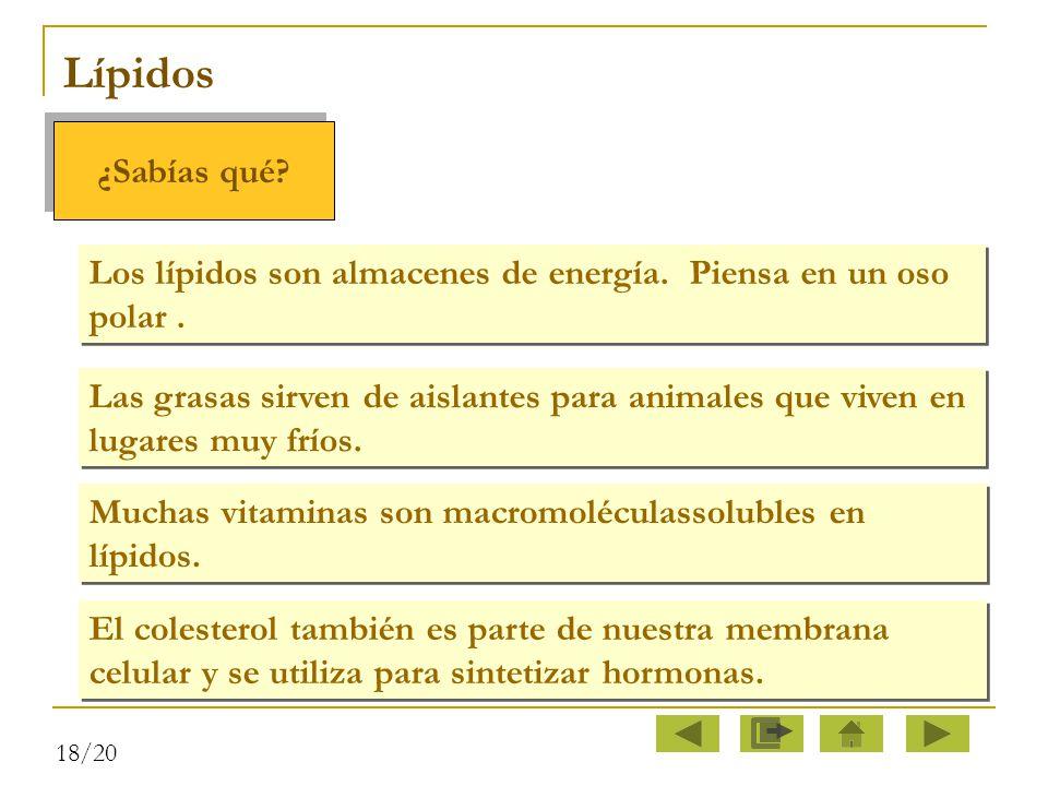 Lípidos ¿Sabías qué Los lípidos son almacenes de energía. Piensa en un oso polar .