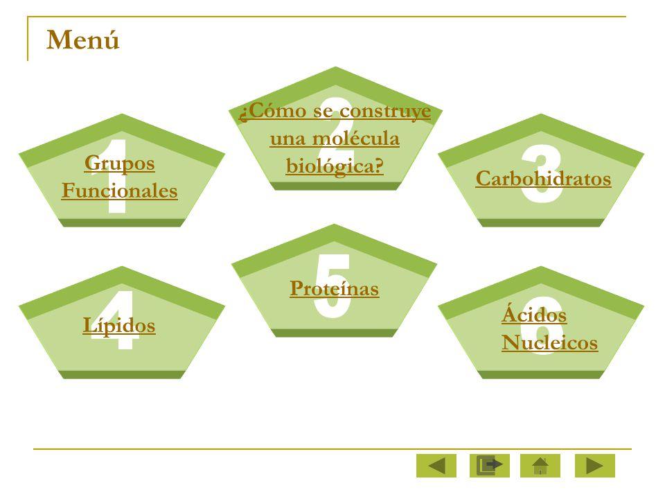 2 1 3 5 4 6 Menú ¿Cómo se construye una molécula biológica Grupos