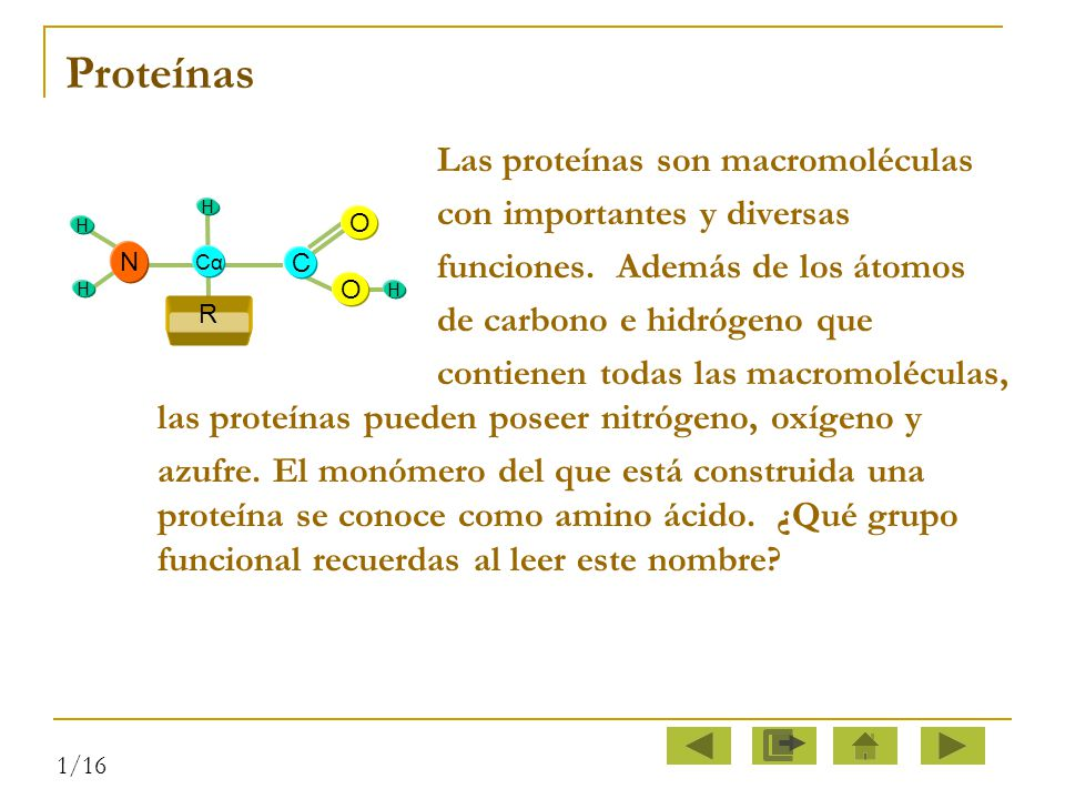 Proteínas Las proteínas son macromoléculas con importantes y diversas