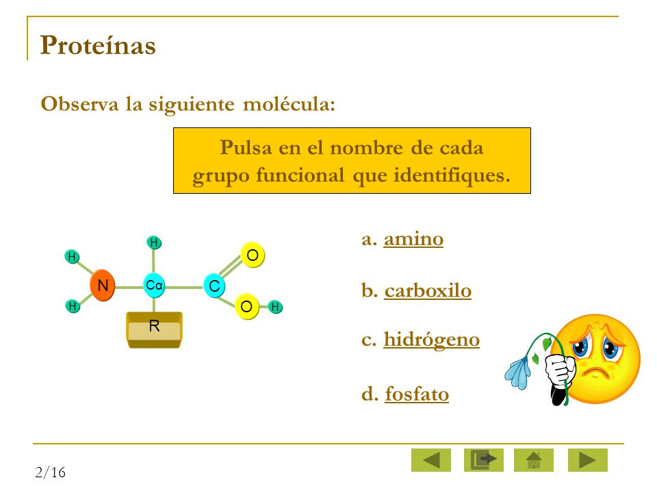 Pulsa en el nombre de cada grupo funcional que identifiques.