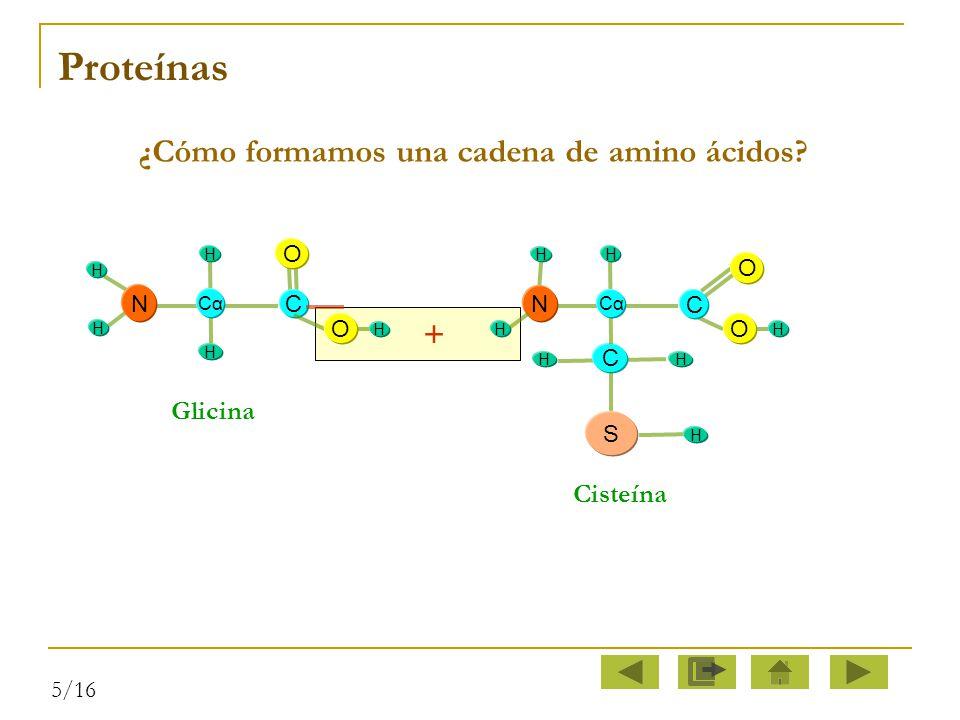 ¿Cómo formamos una cadena de amino ácidos