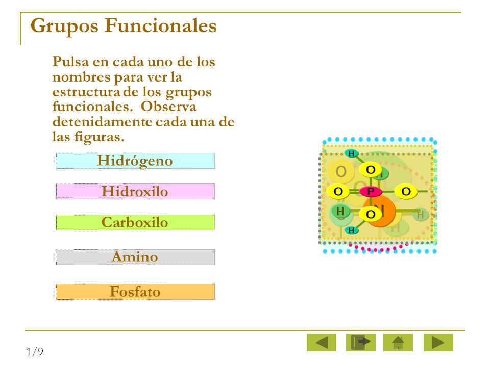 Grupos Funcionales Hidrógeno Hidroxilo Carboxilo Amino Fosfato